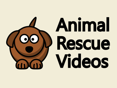 Heartwarming animal rescue missions