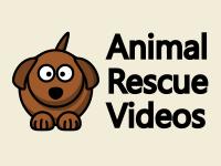 Animal Rescue Videos